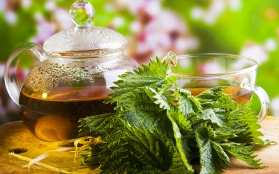 Herbs to Help Fertility: Red Raspberry Leaf and Nettles